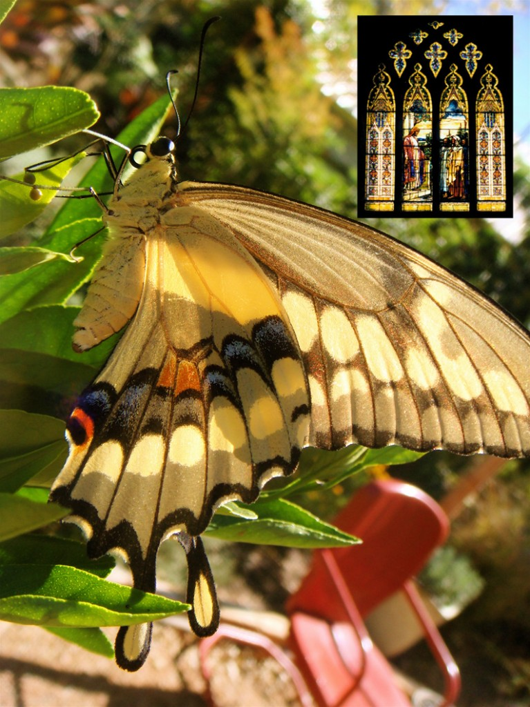 Swallowtail_stained glass