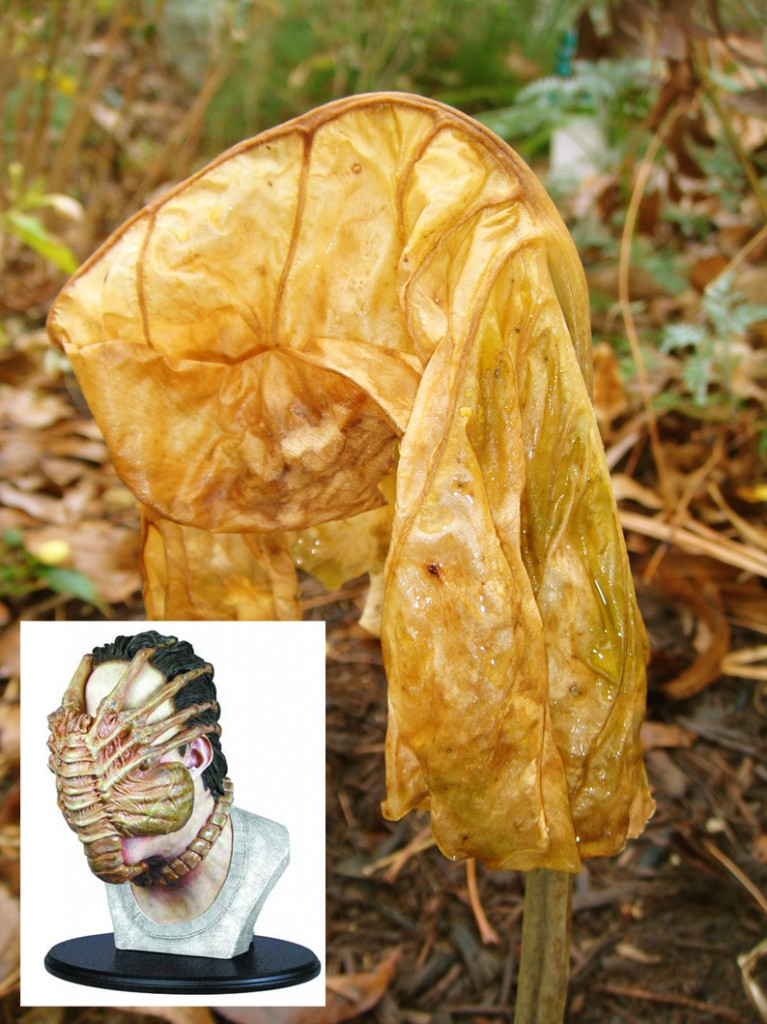 elephant ear_alien