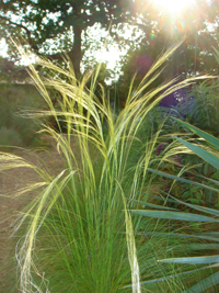 "Post image for Picture This Photo Contest: ""Ornamental Grasses"":"